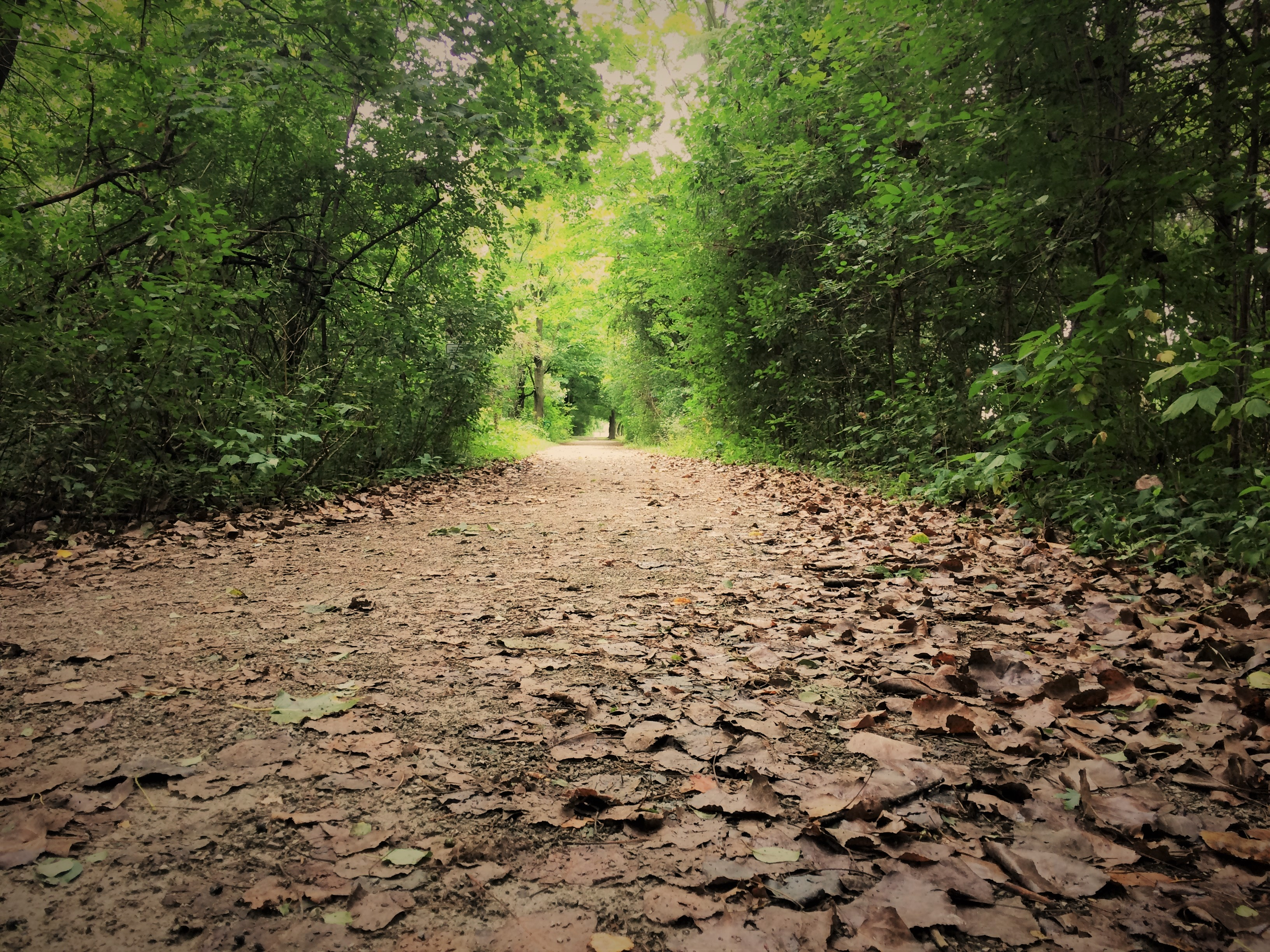 Klaus Wehrenberg Trail with leaves covering the path